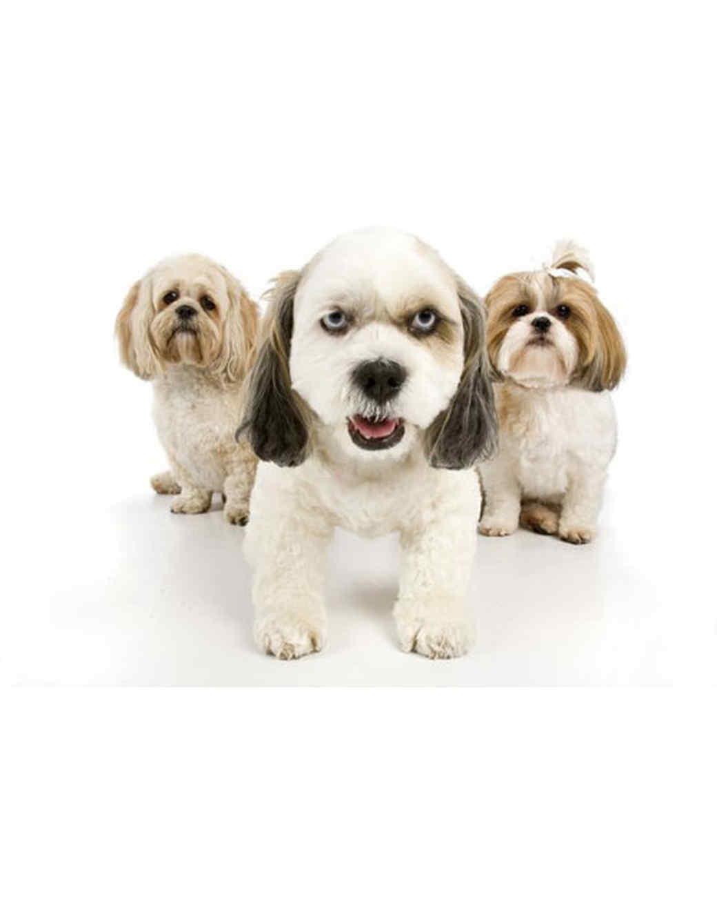 pets-13664365-31533614.jpg