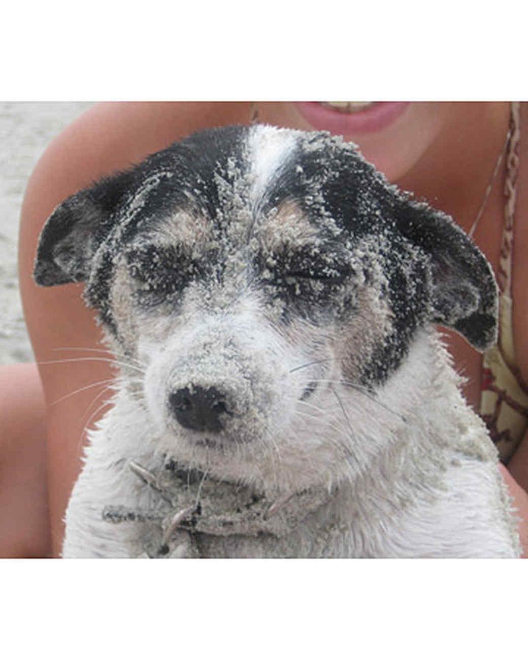 pets_beach_ori00094454.jpg
