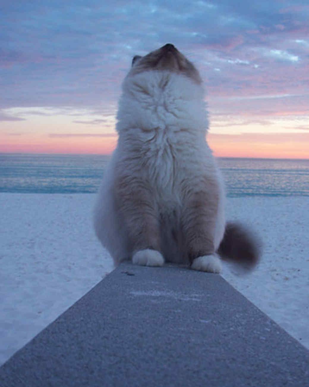pets_beach_ori00094965.jpg