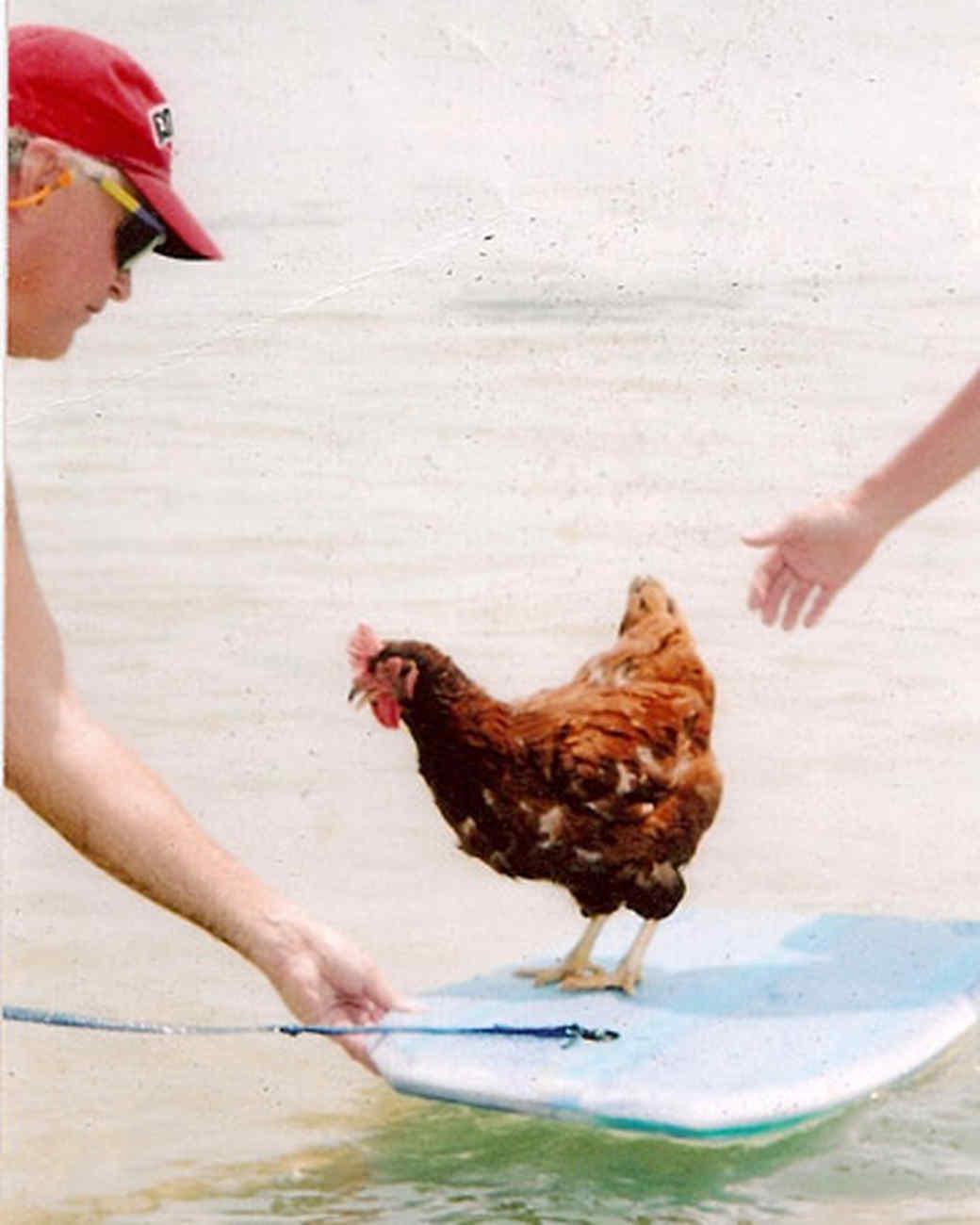 pets_beach_ori00095741.jpg