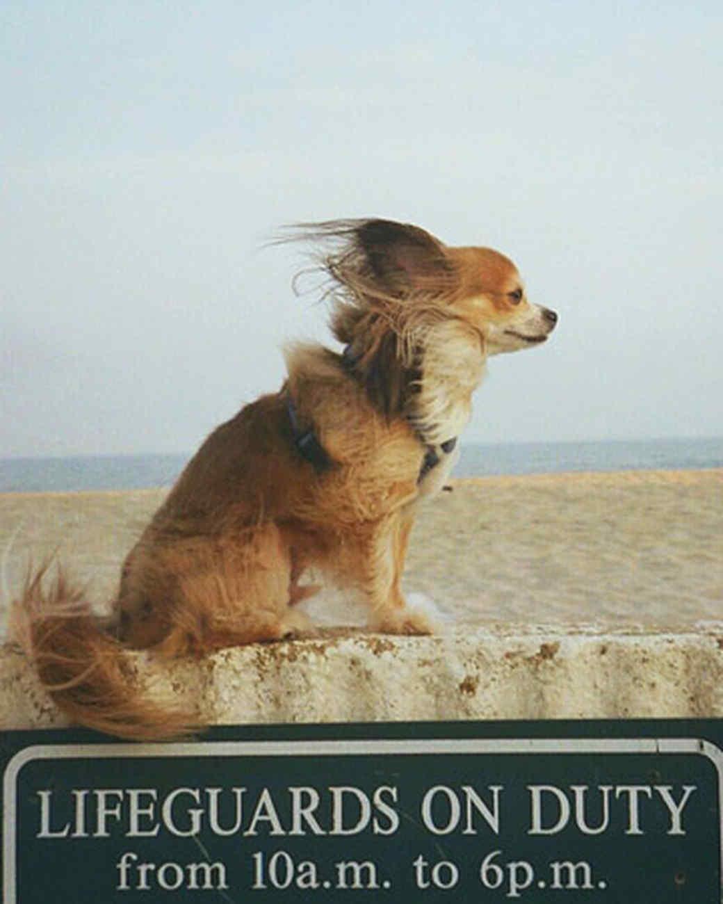 pets_beach_ori00095903.jpg