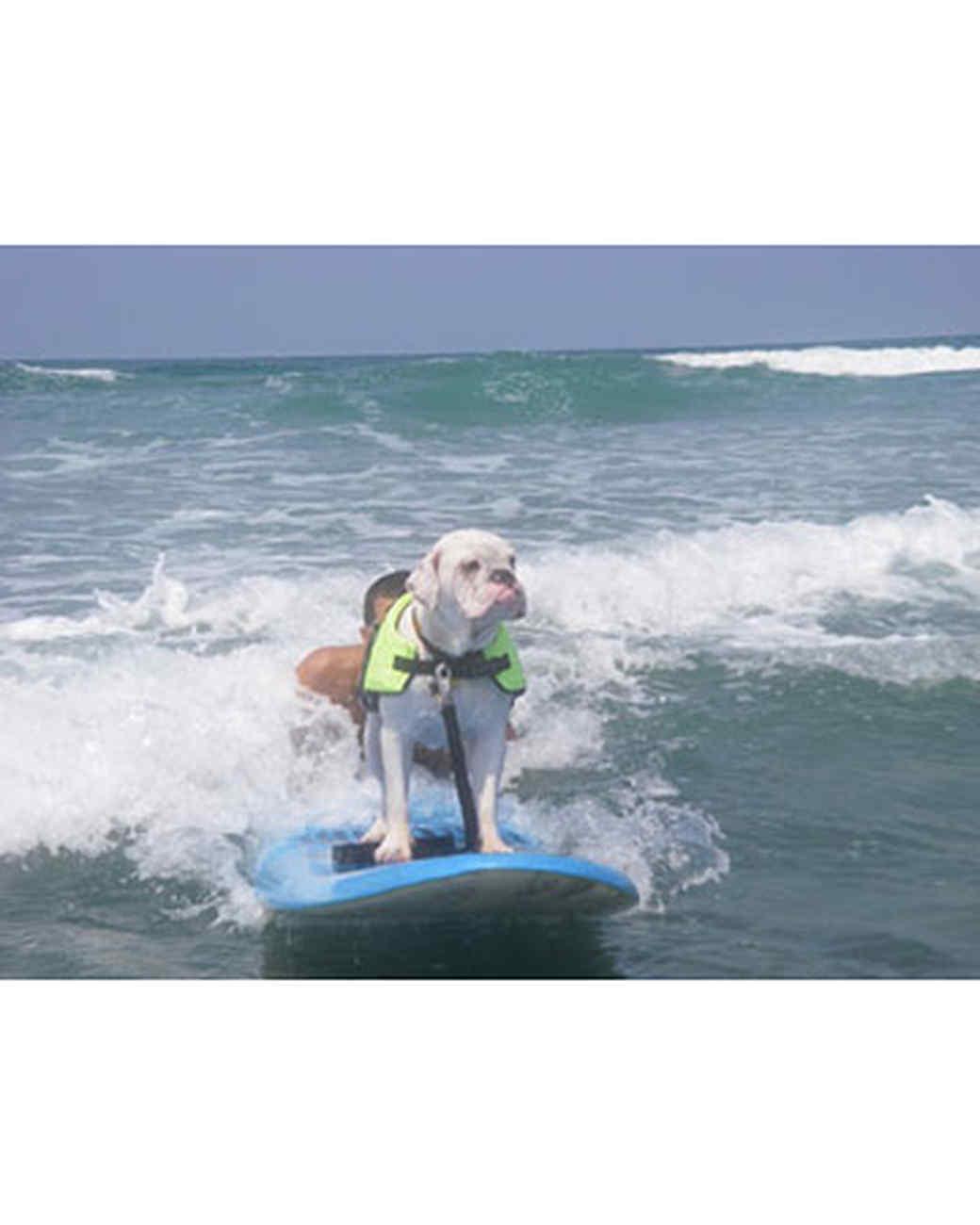 pets_beach_ori00095991.jpg