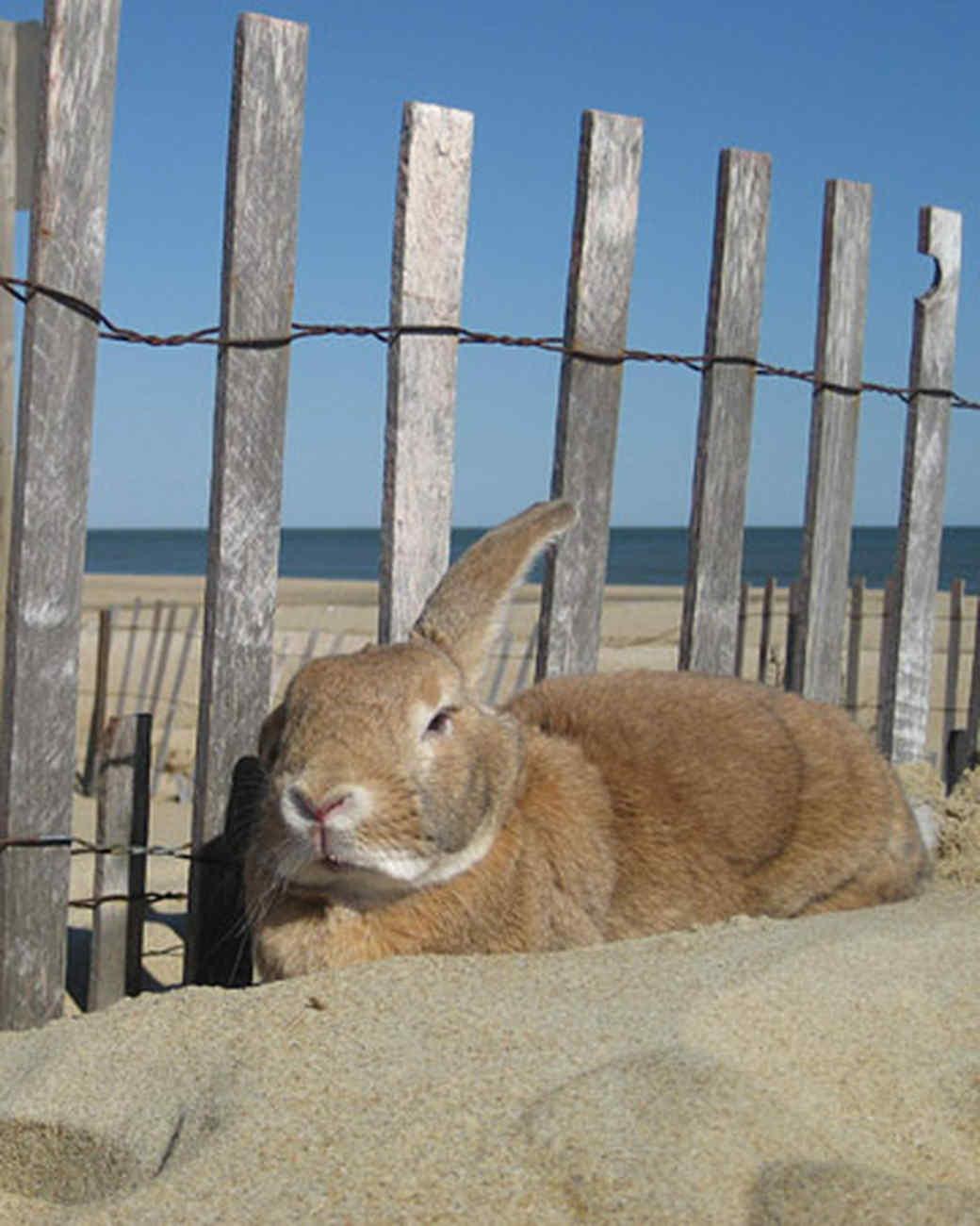 pets_beach_ori00097500.jpg