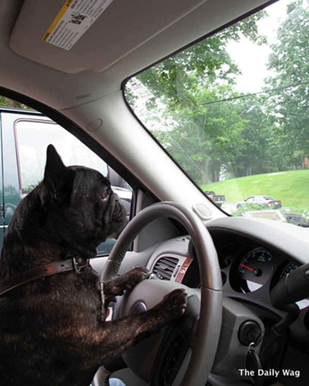 pets_best_wag_driving1.jpg