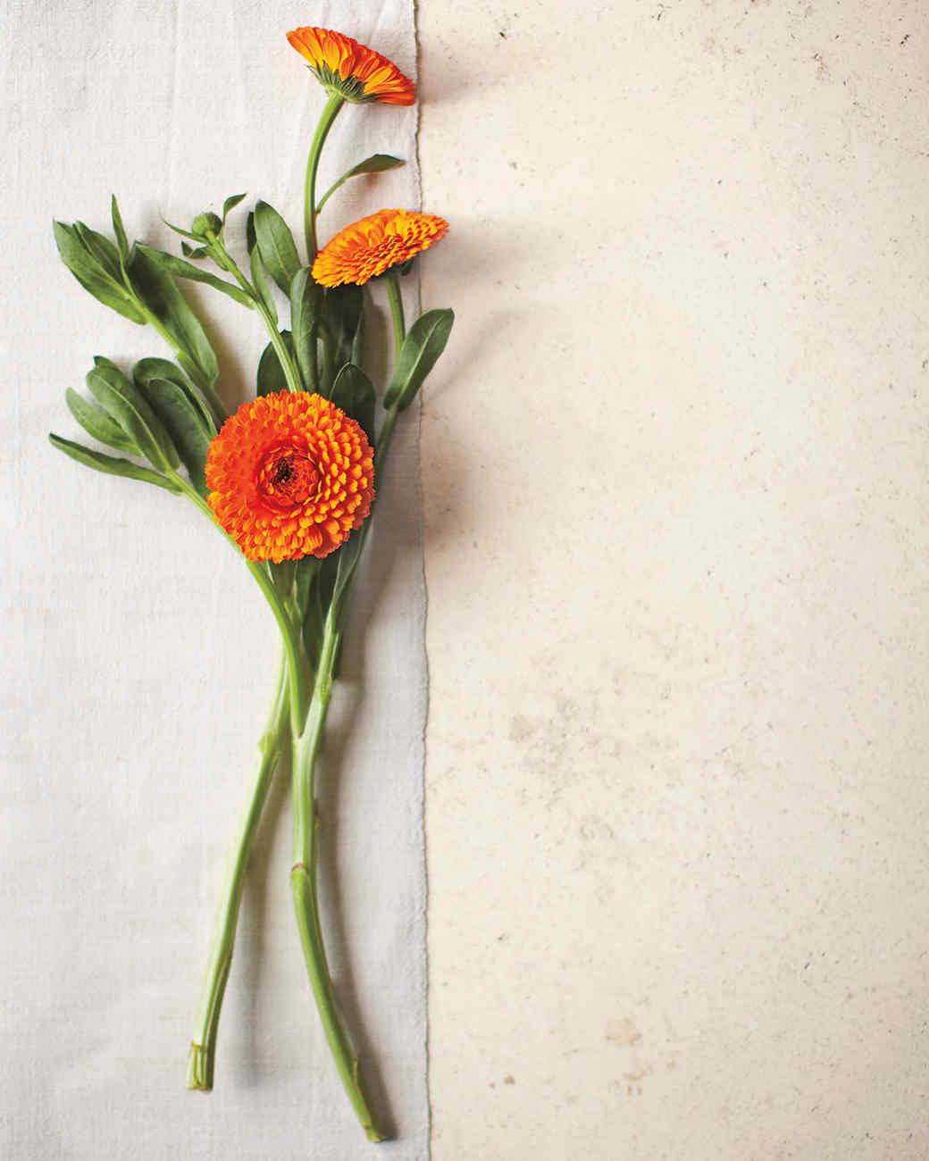 pot-marigold-mbd108713.jpg