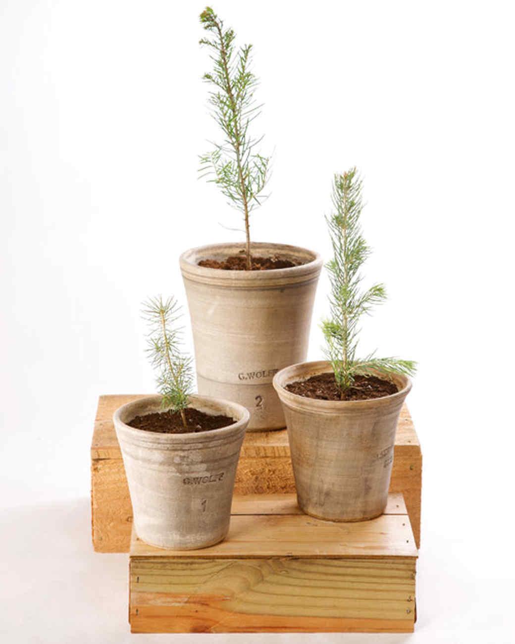 4149_042409_plantedtree.jpg