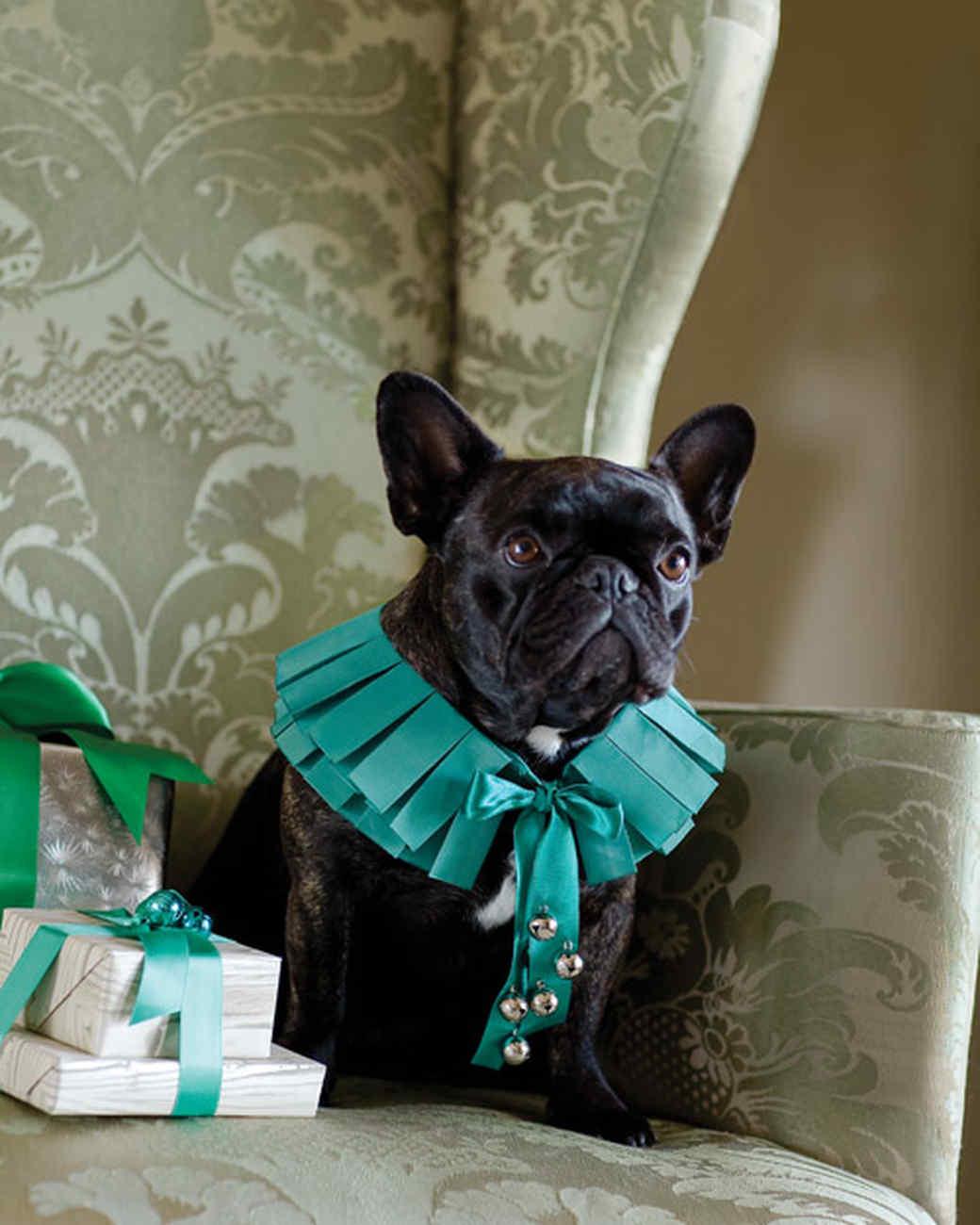 Jingle-Bell Dog Collar