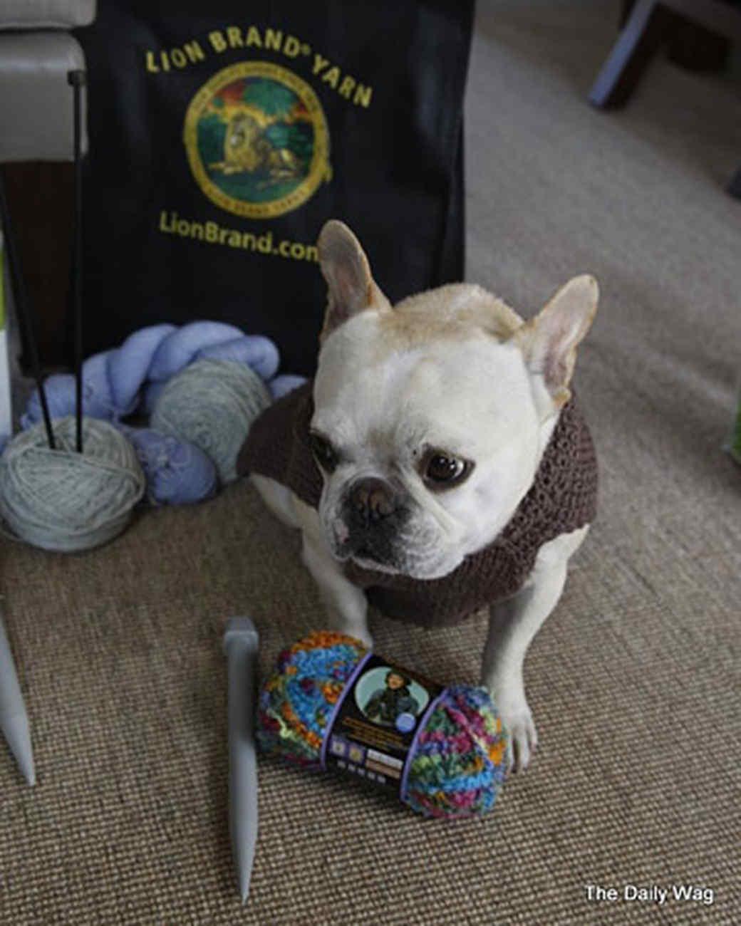pets_best_wag_knitting1.jpg