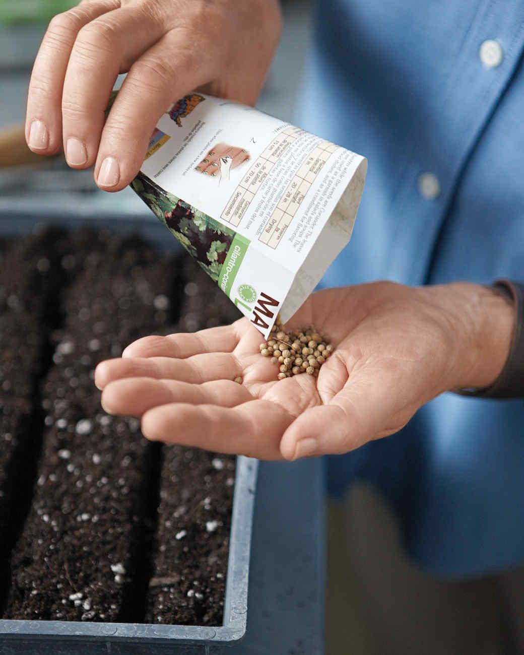 seed-sowing-2-mld108042.jpg