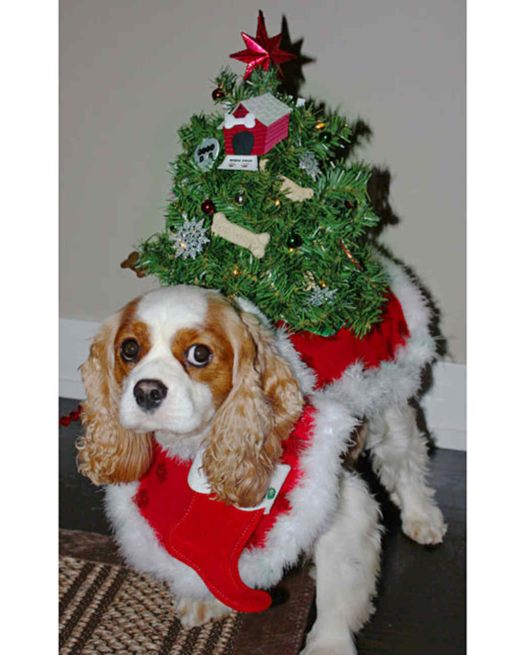 05_6034_102810_christmas.jpg