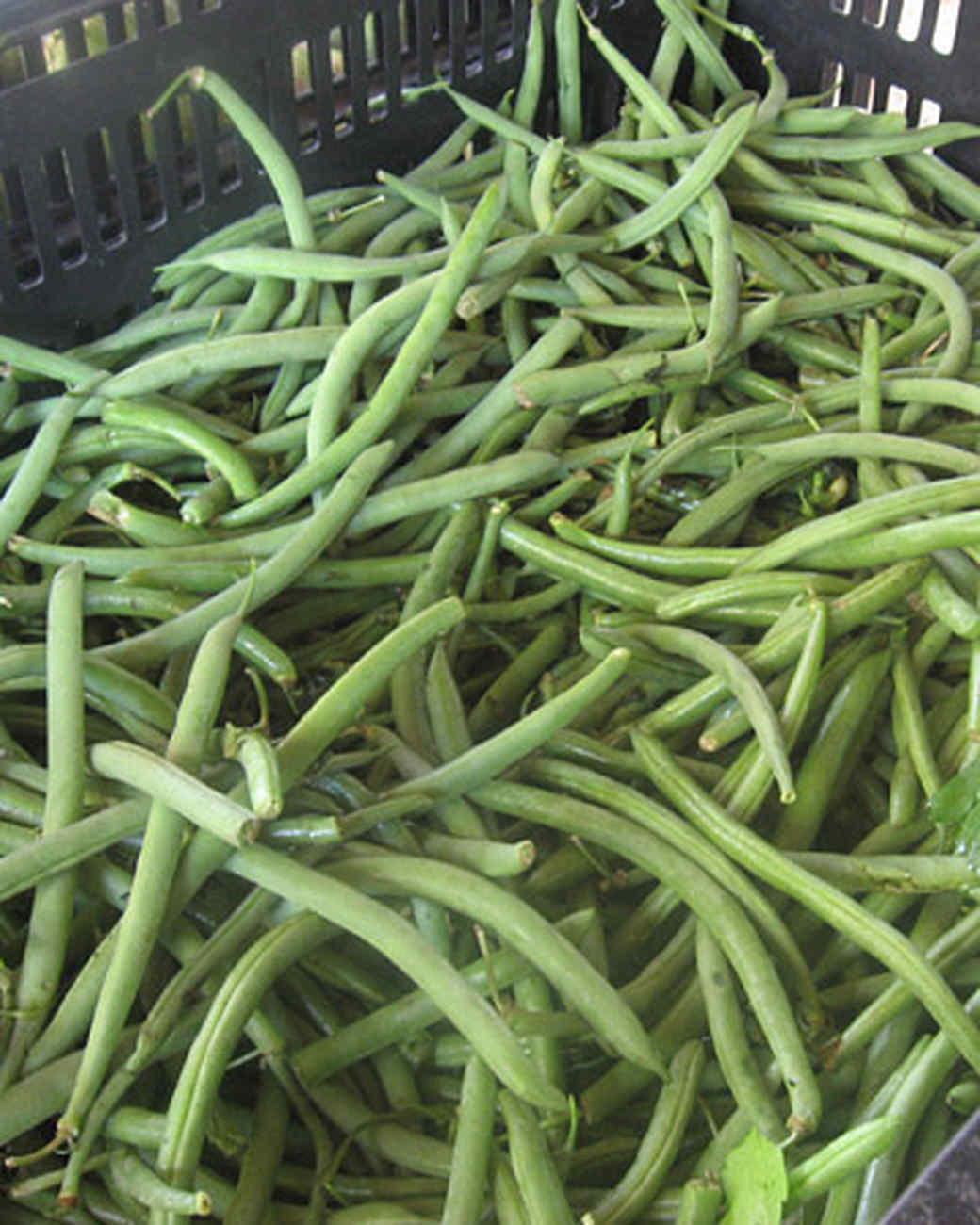 edfblg_082608_greenbeans.jpg