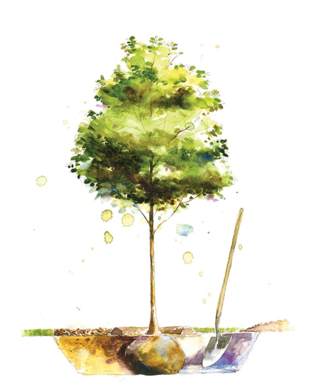 mla105636_0410_planttree.jpg