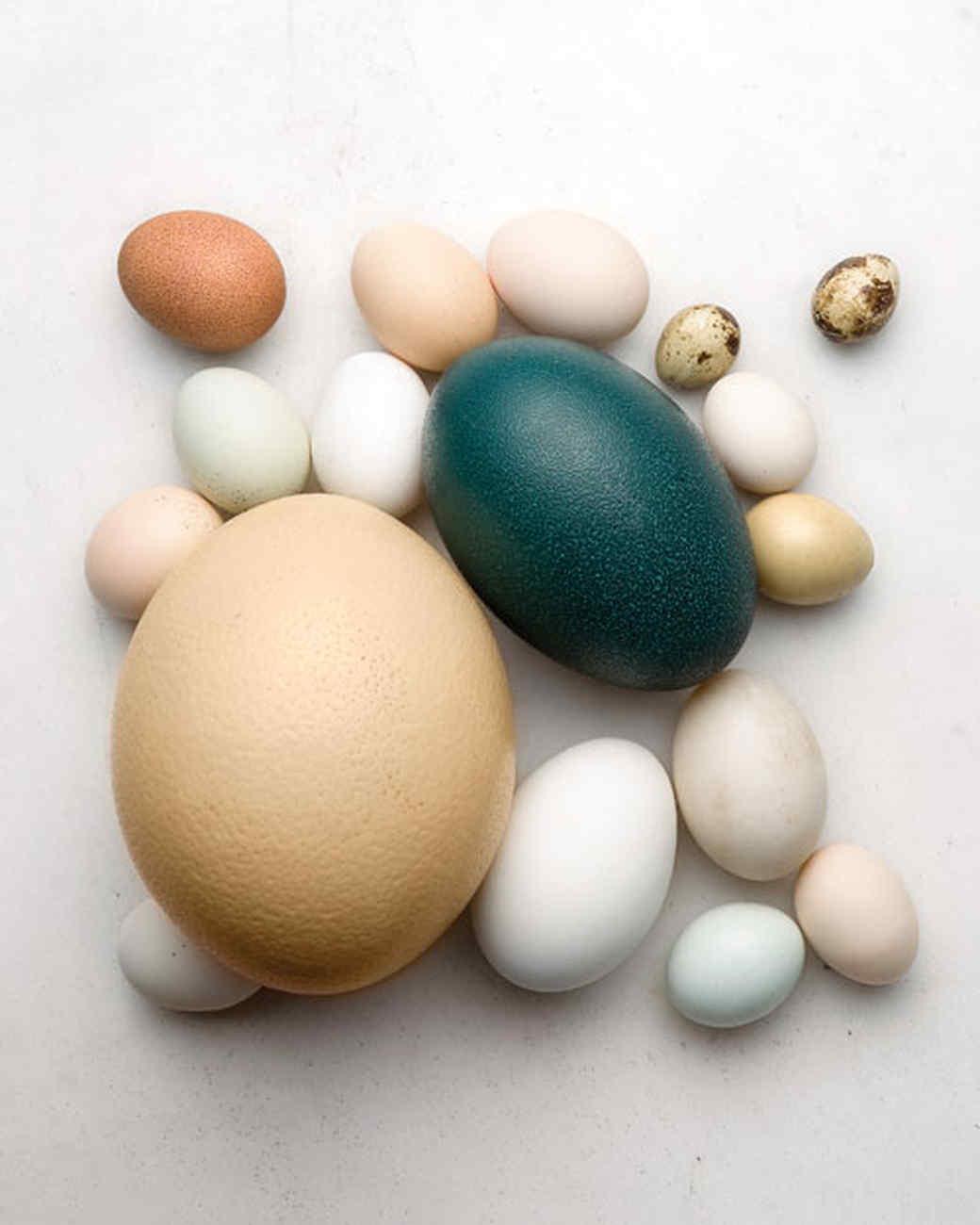 mld103286_0408_gloss_egg.jpg