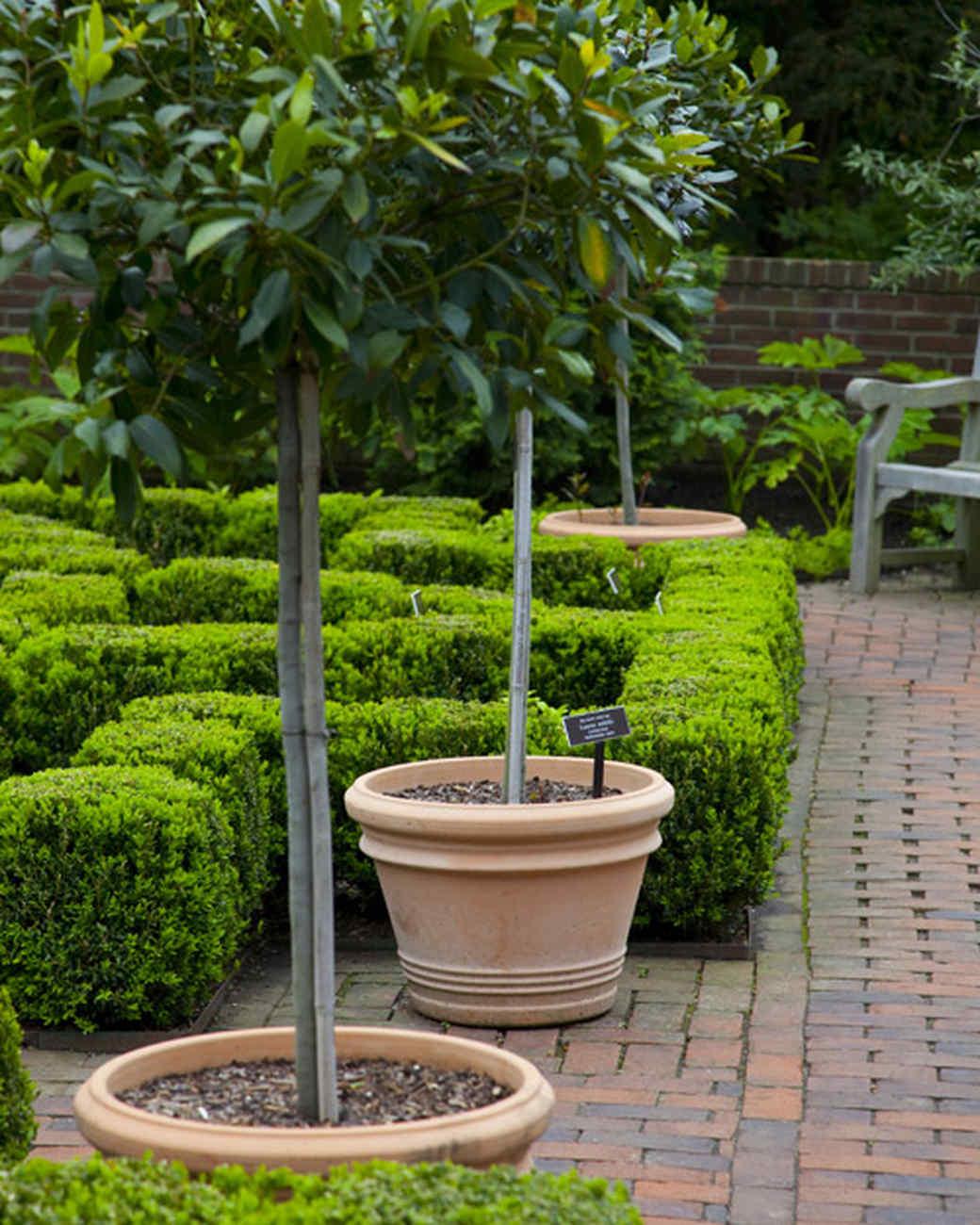 ms_edible_garden_mg_0166.jpg