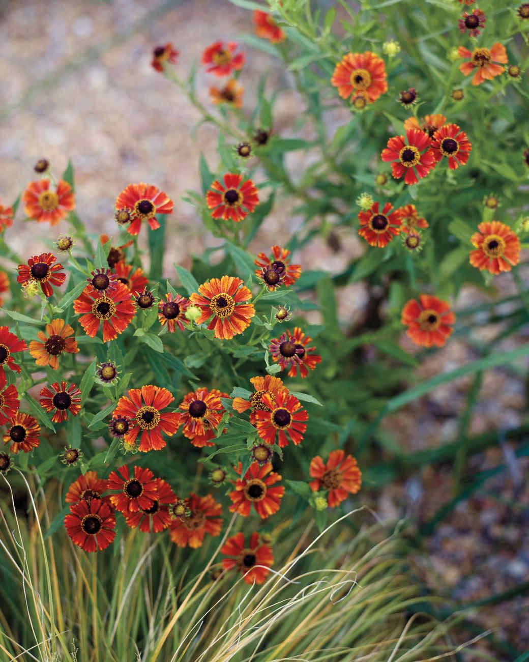 ogden-garden-276-d111601.jpg