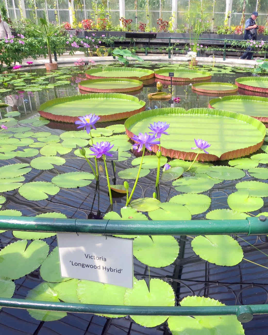 royal-botanic-gardens-19.jpg