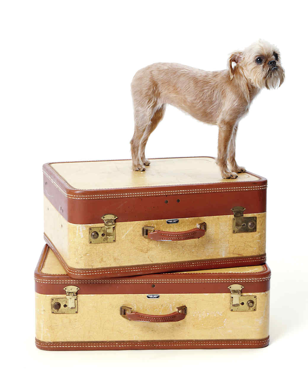 travel-pets-192-md109721.jpg