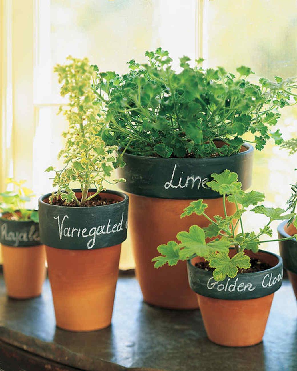 & 12 Ways to Personalize Terra Cotta Pots | Martha Stewart