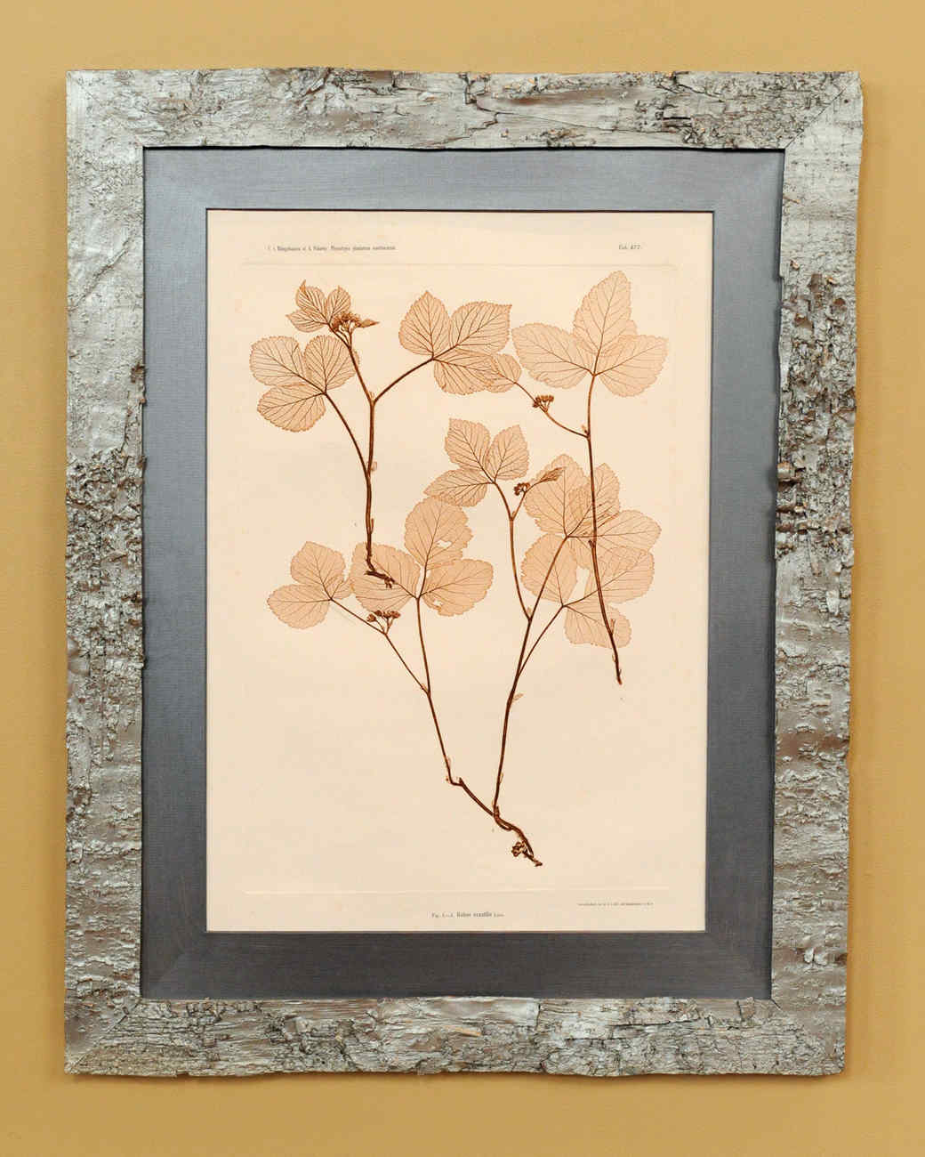 Birch bark frame video martha stewart birch bark frame jeuxipadfo Choice Image