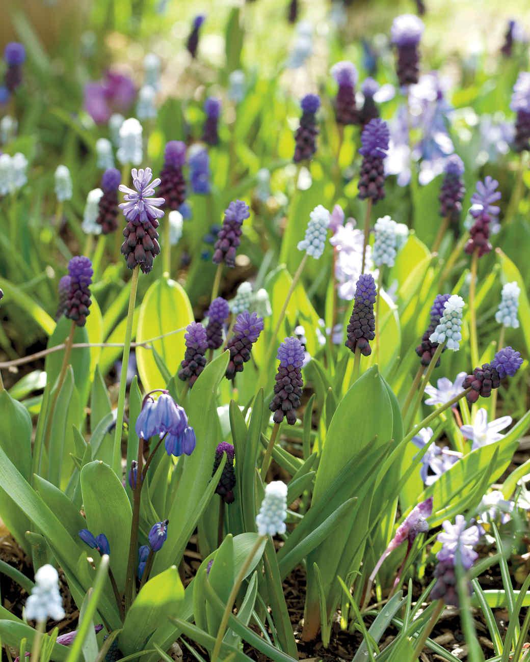 blue-bulbs-0911-mld107428.jpg