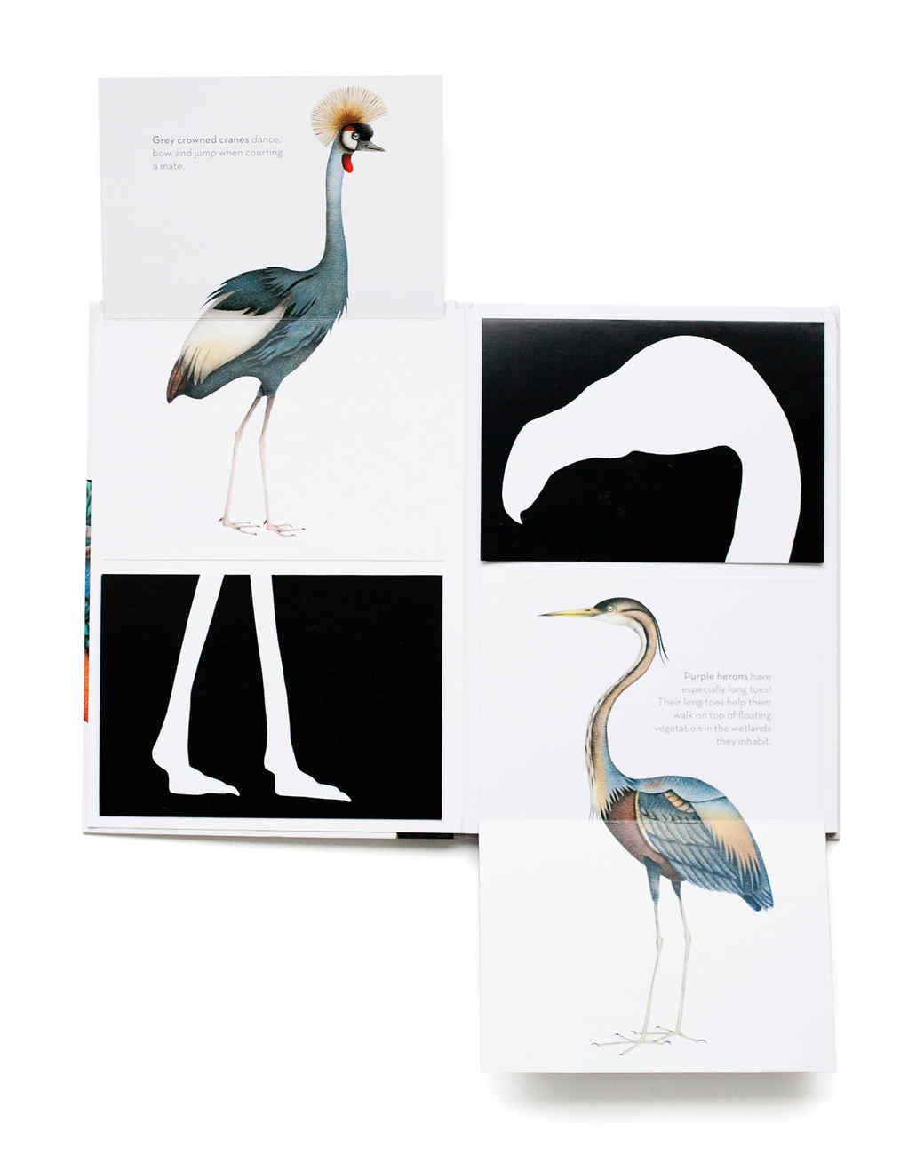 chronicle-books-bird-book.jpg