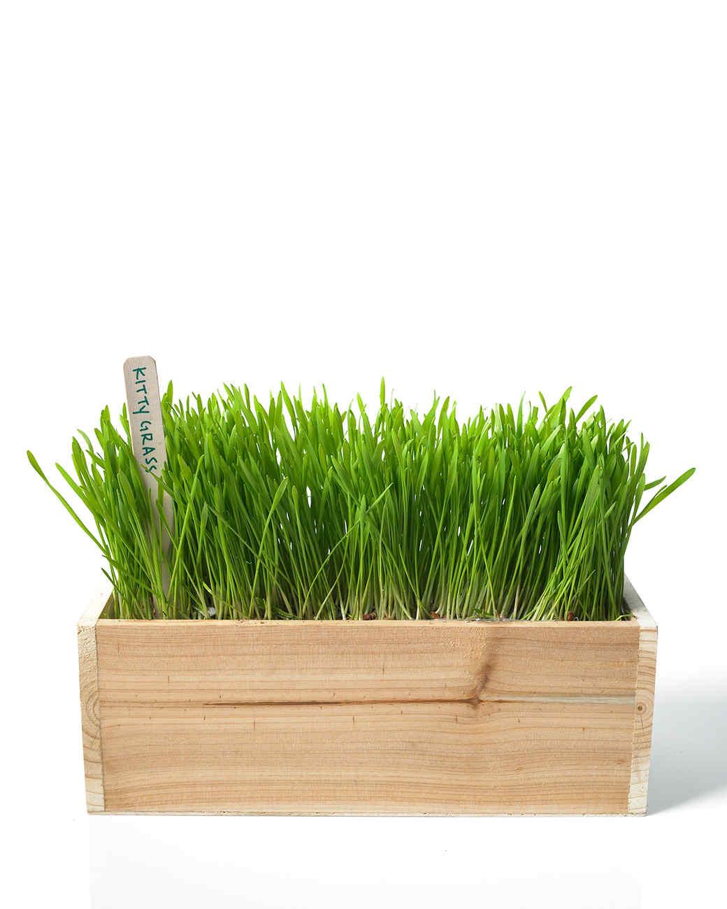 ld105281_0110_kitty_grass_hd.jpg