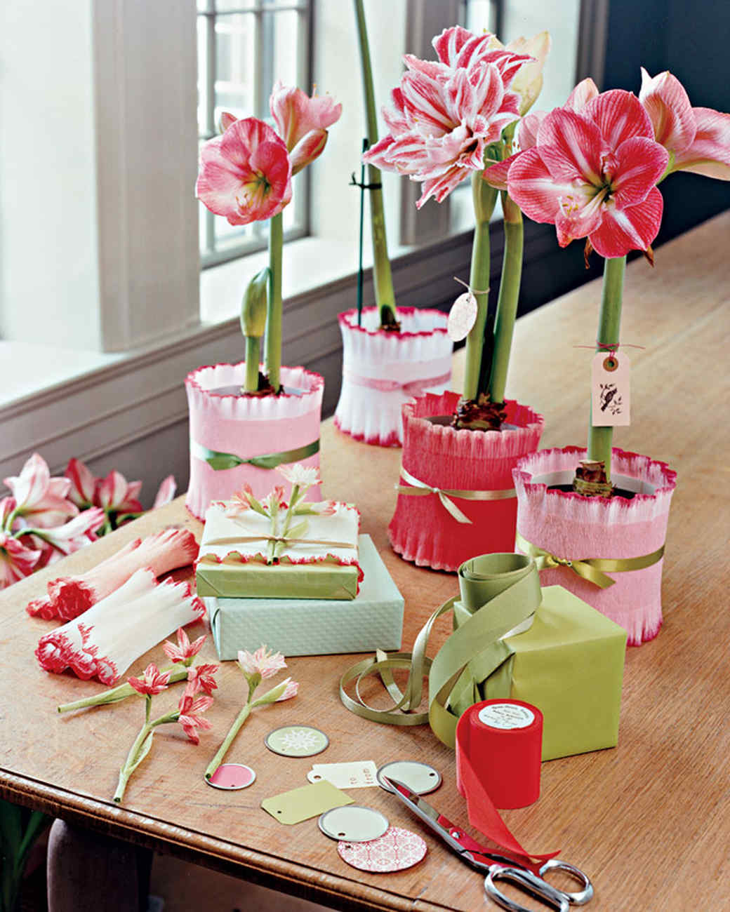 table of amaryllis flowers being prepped for gifting
