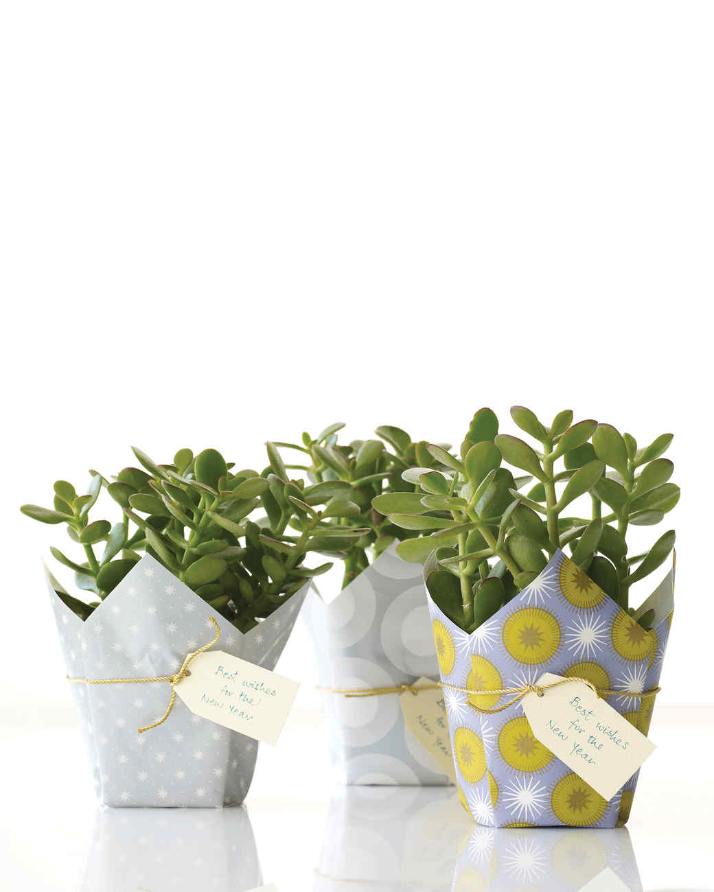 Lucky Plant Gift | Martha Stewart