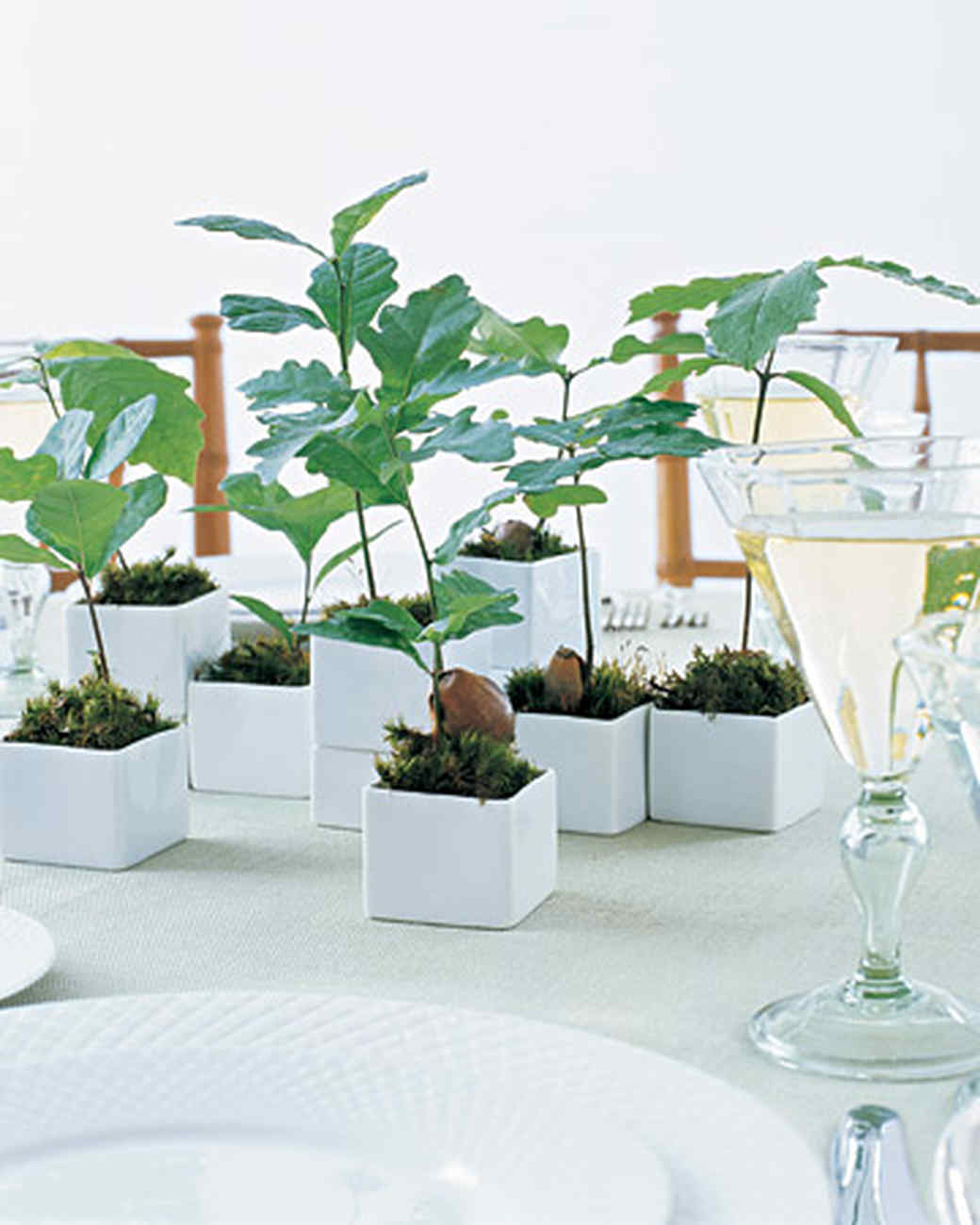 Think Green Seedling Favors Martha Stewart