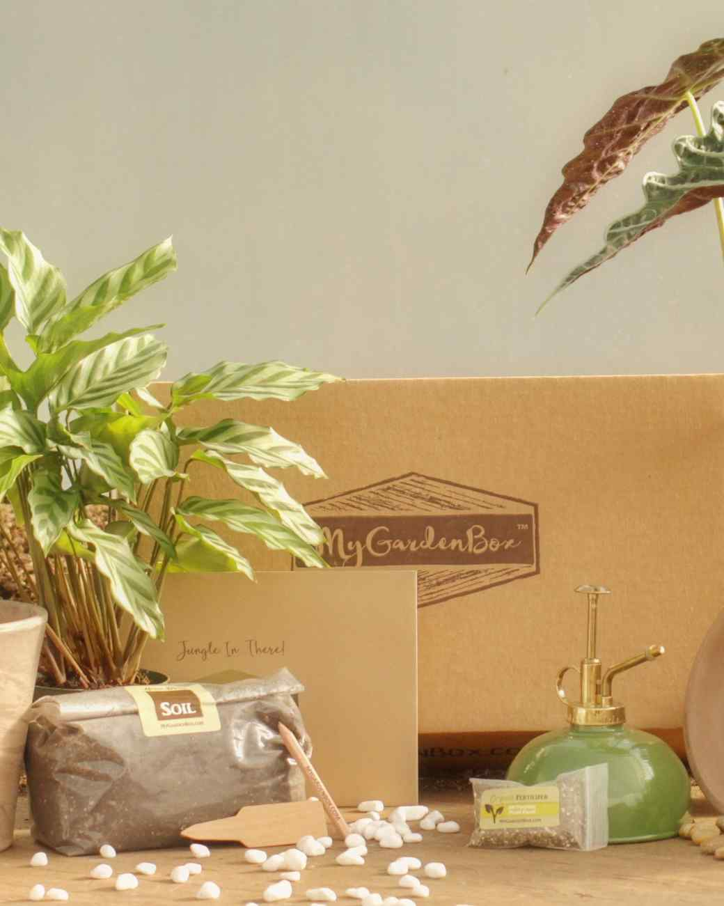 Eight Subscription Services That Deliver Plants Right to Your Front Door