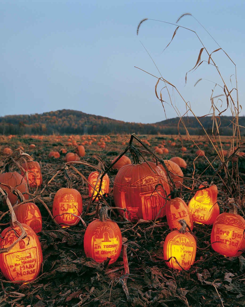 gourds in the graveyard - Decorated Halloween Pumpkins