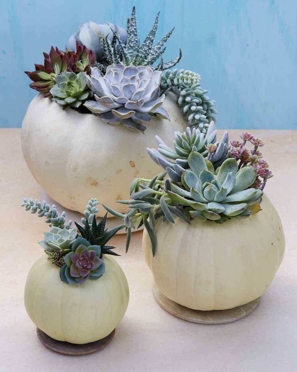 Succulent Planter Pumpkins | Martha Stewart