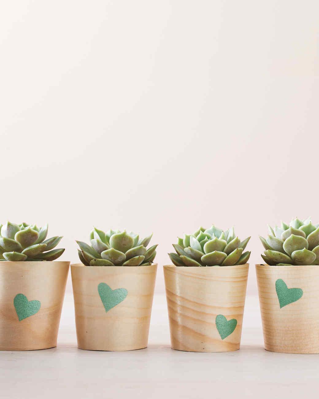 succulents-0257-mld110690.jpg
