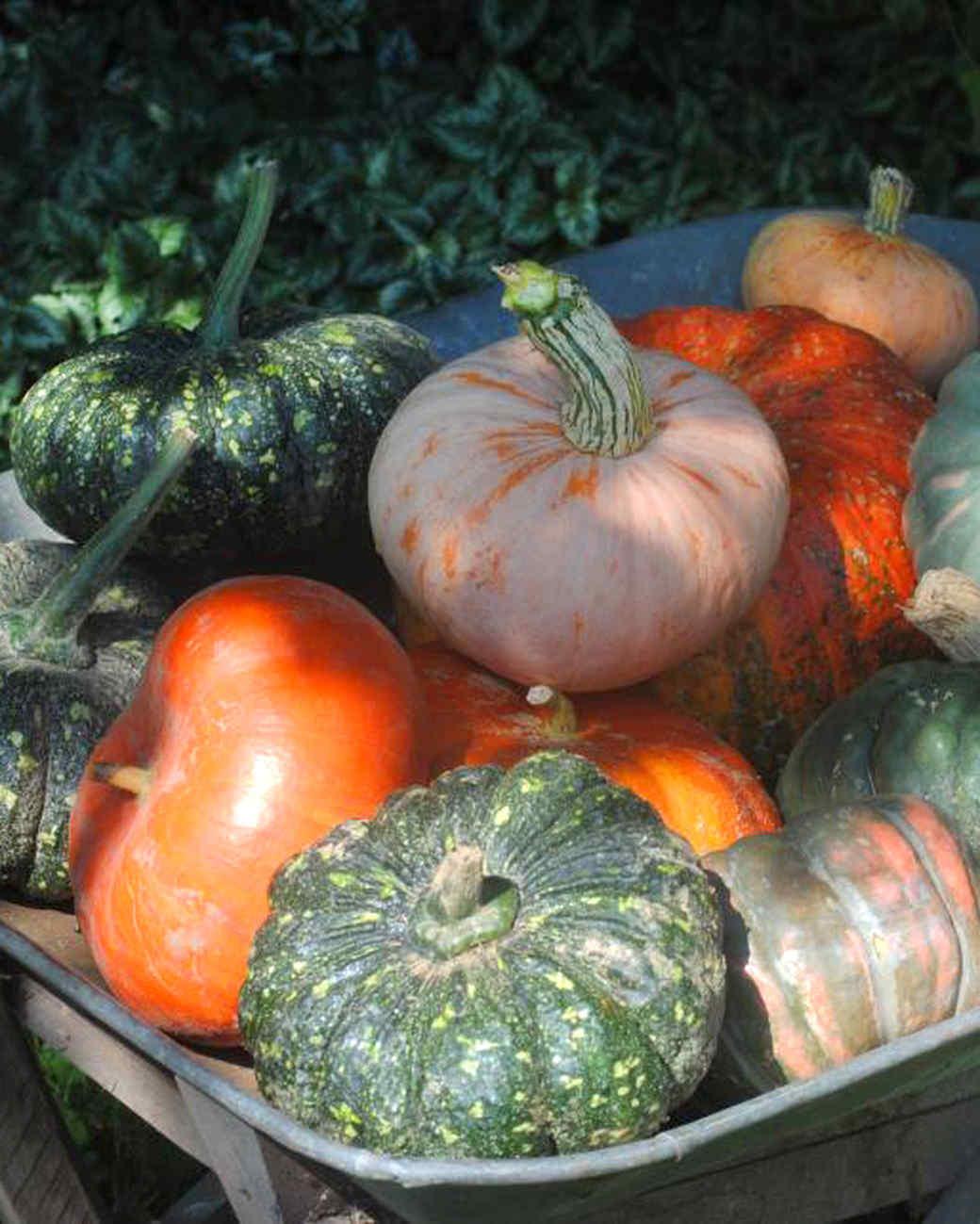 unusual-pumpkins-mslb7021.jpg