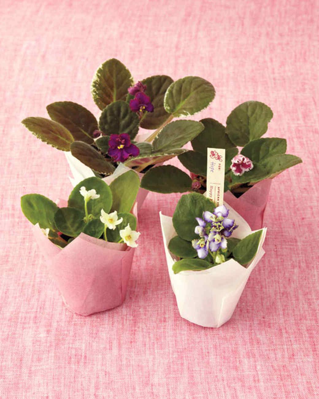 violet-gems-0511mld107066.jpg