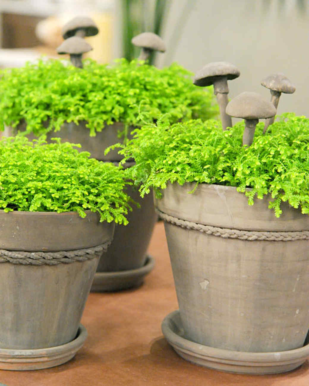 Milk Paint Terra Cotta Pots Video Martha Stewart