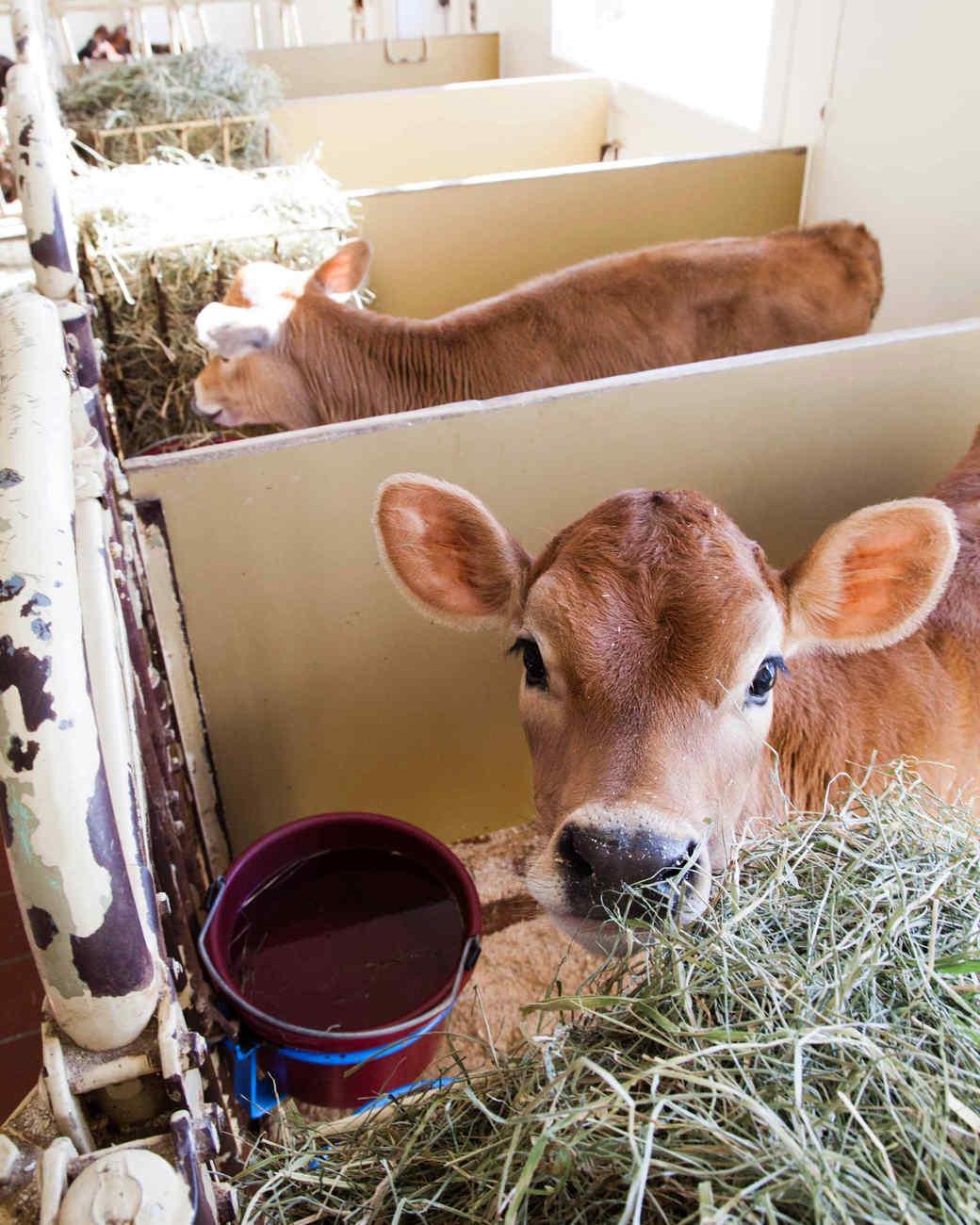 billings-farm-0611-d109181.jpg