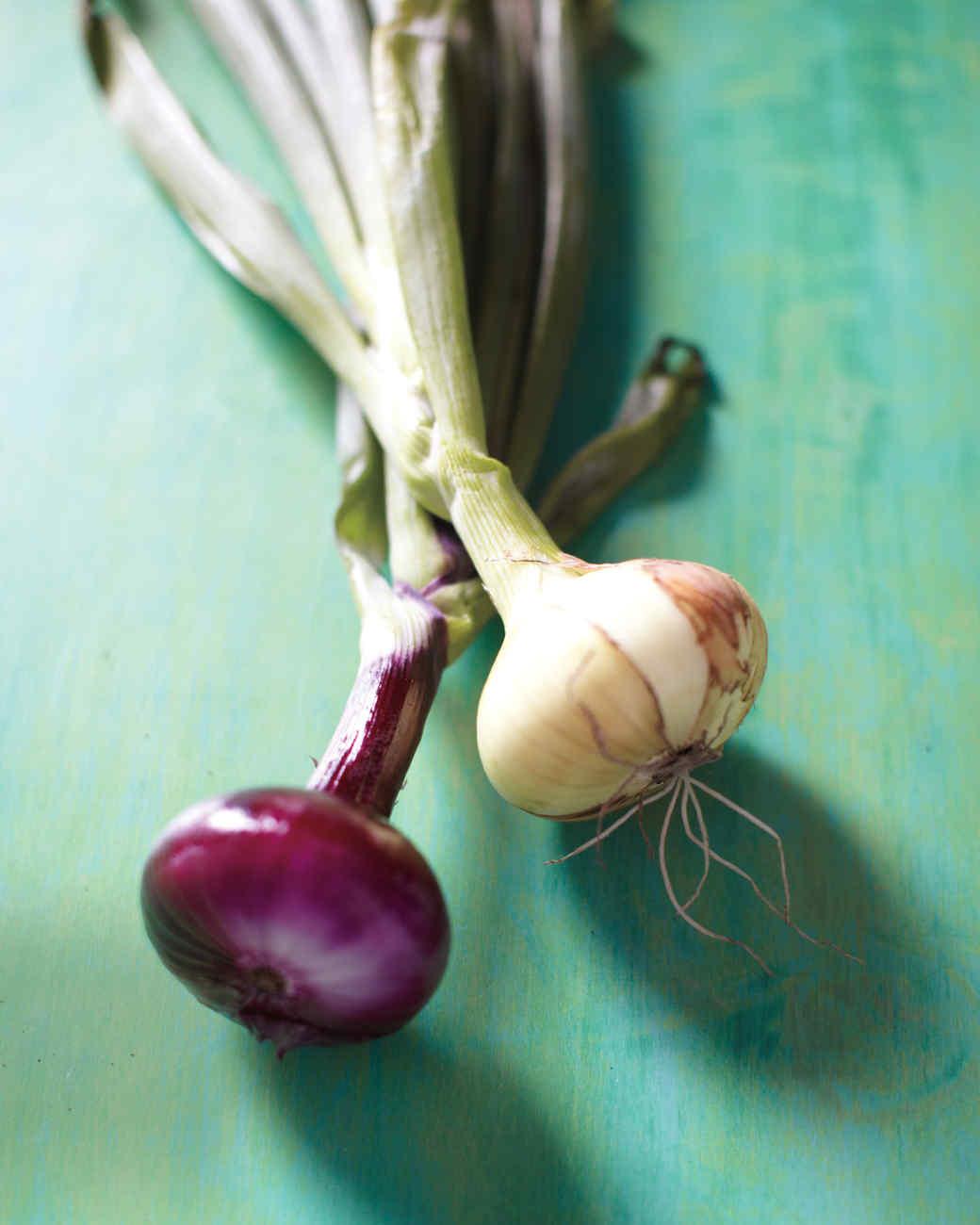 cipollini-onions-mld107882.jpg