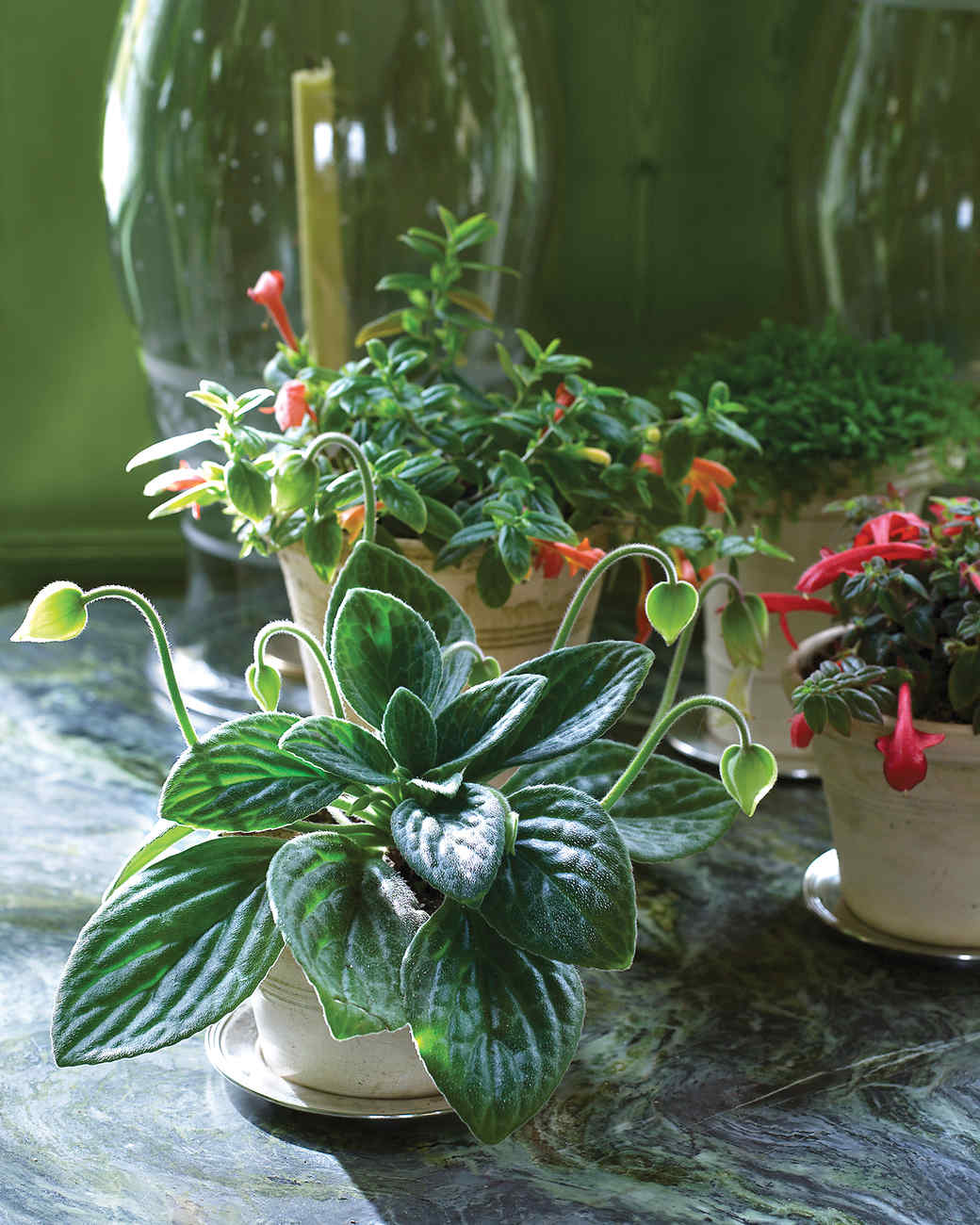 Decorating Dilemma House Plants: Martha's Home: Decorating With Houseplants