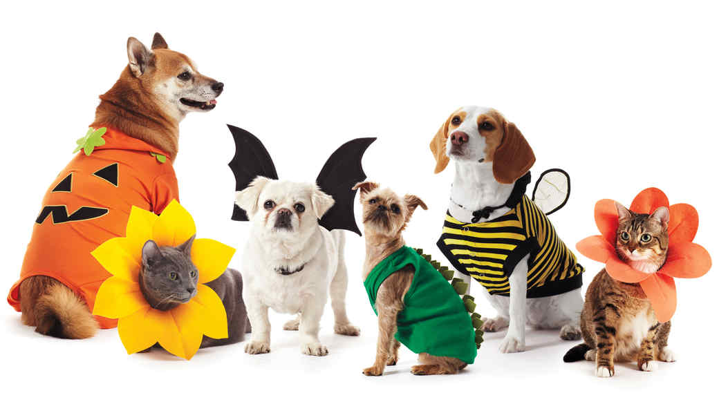 The Most Popular Pet Halloween Costumes You'll See in 2017