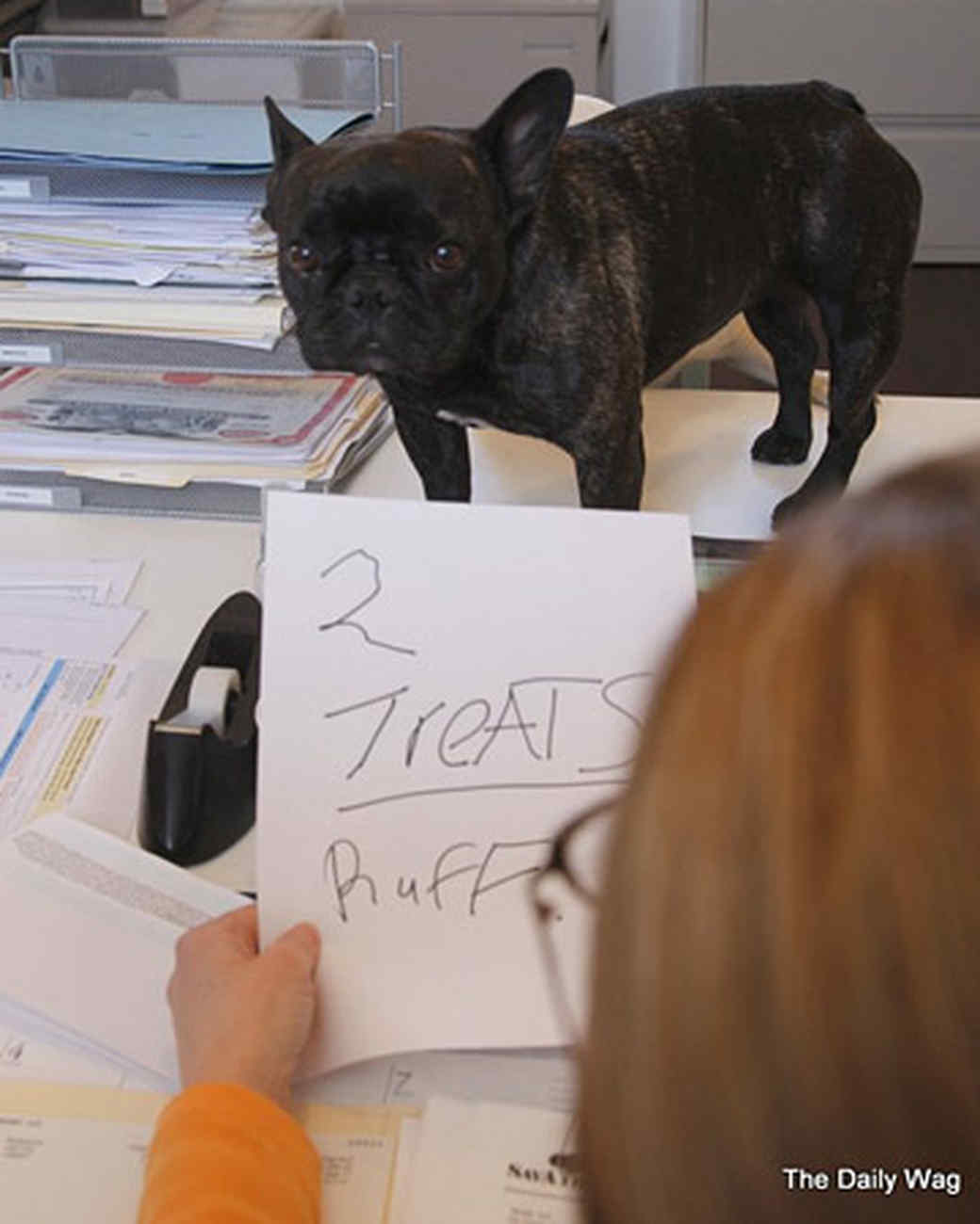 pets_best_wag_negotiating1.jpg