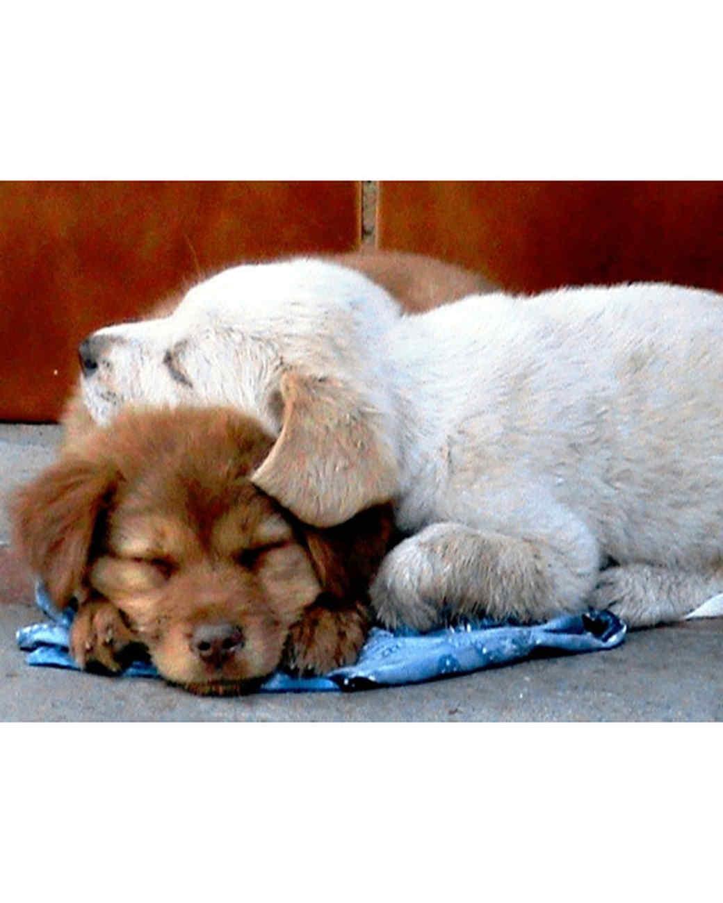 pets_lazy_0909_ori00098520.jpg