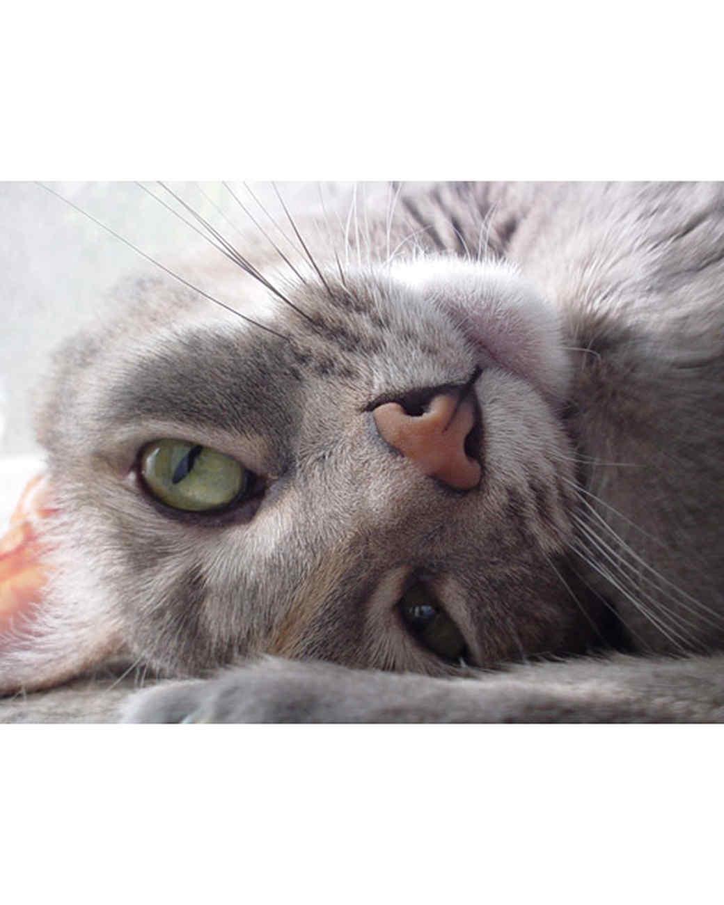 pets_lazy_0909_ori00099141.jpg