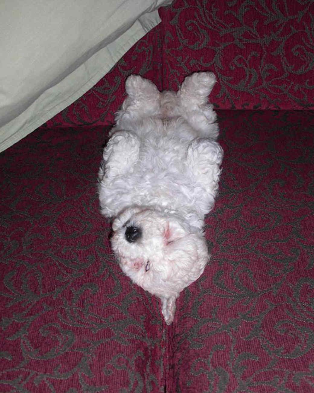 pets_lazy_0909_ori00100423.jpg