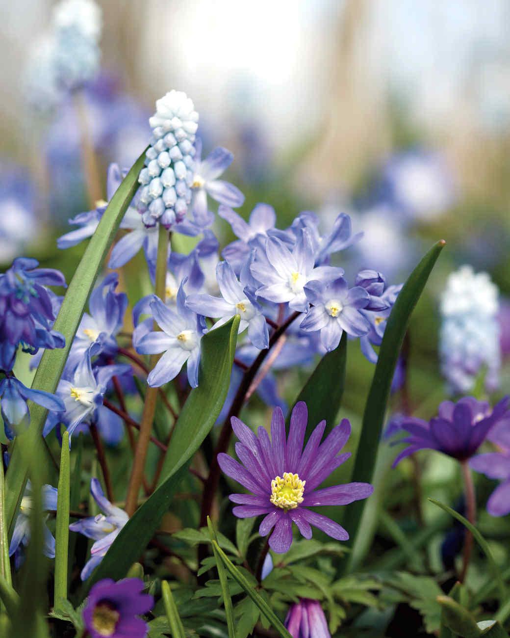 blue-bulbs-2-0911-mld107428.jpg