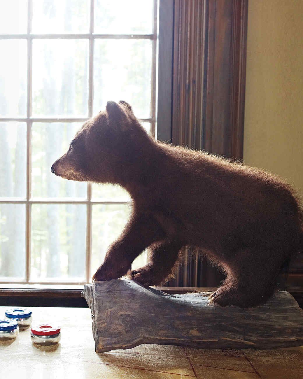 cub-taxidermy-1011mld106418.jpg