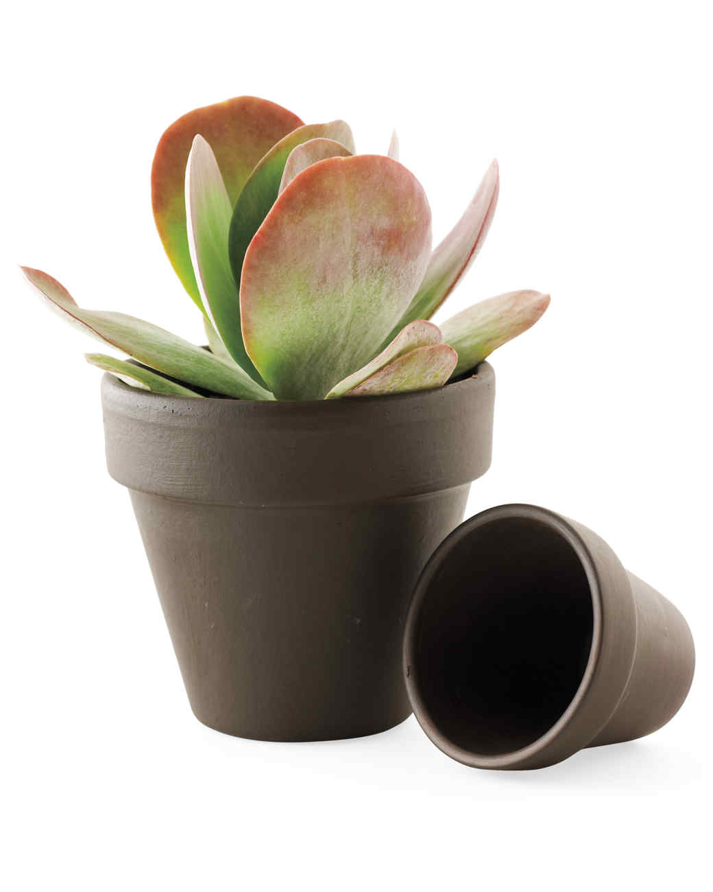 How to update a clay flower pot 64