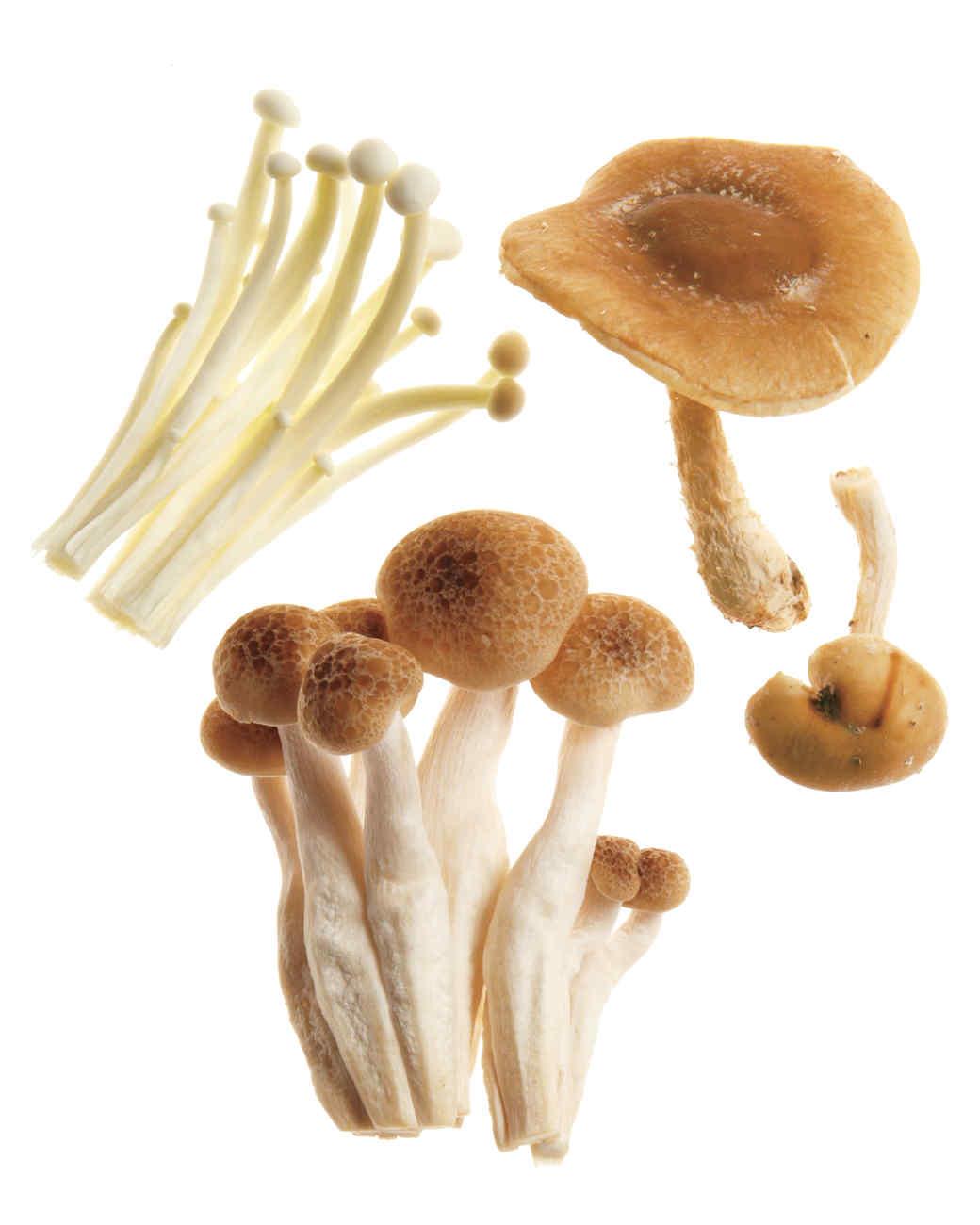 fungi-perfecti-059-md109333.jpg