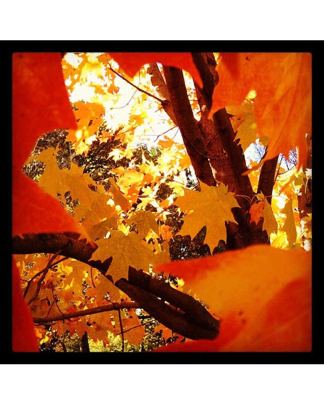 halloween-hunt-ugc-1-haro73.jpg