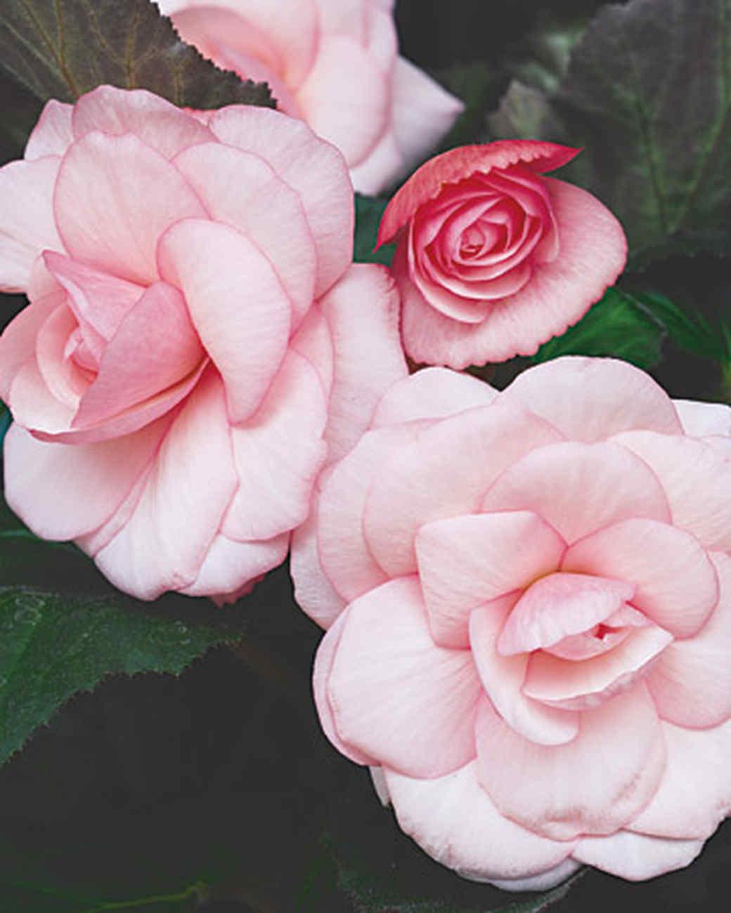 Shade Loving Plants Martha Stewart